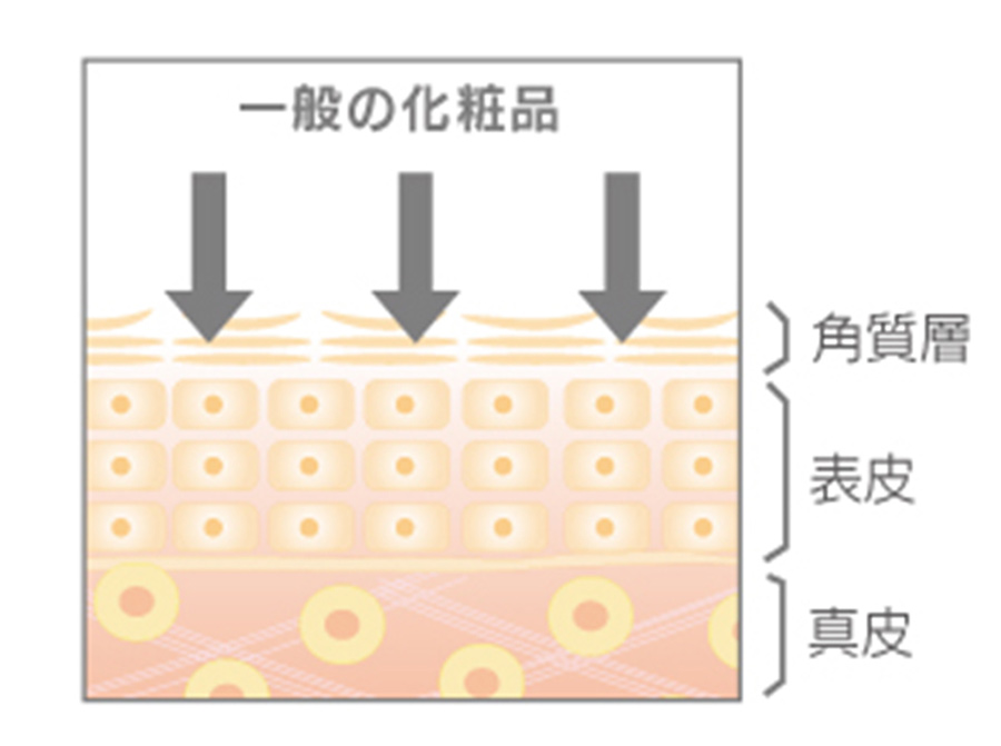 一般の化粧品は肌表面(角質層)のみに作用